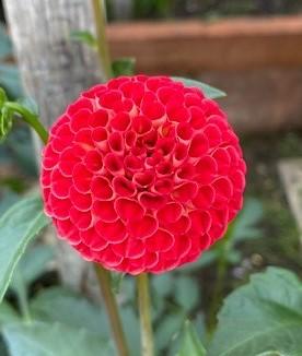 6206-Stoneleigh Joyce-Quamrun Eldridge-Asma Khan