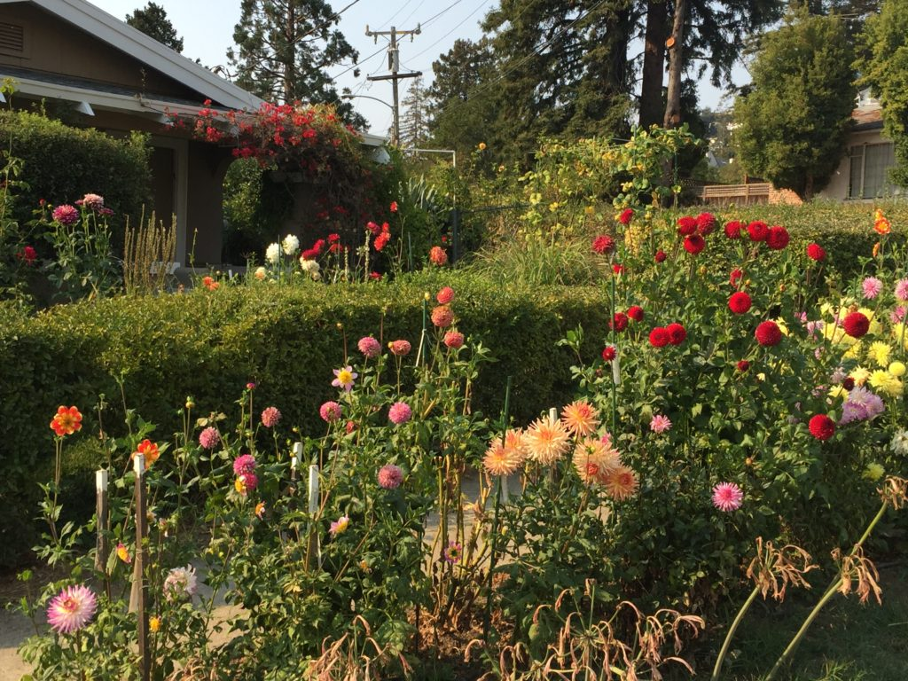9902-Garden Assortment-Deva Lowenthal