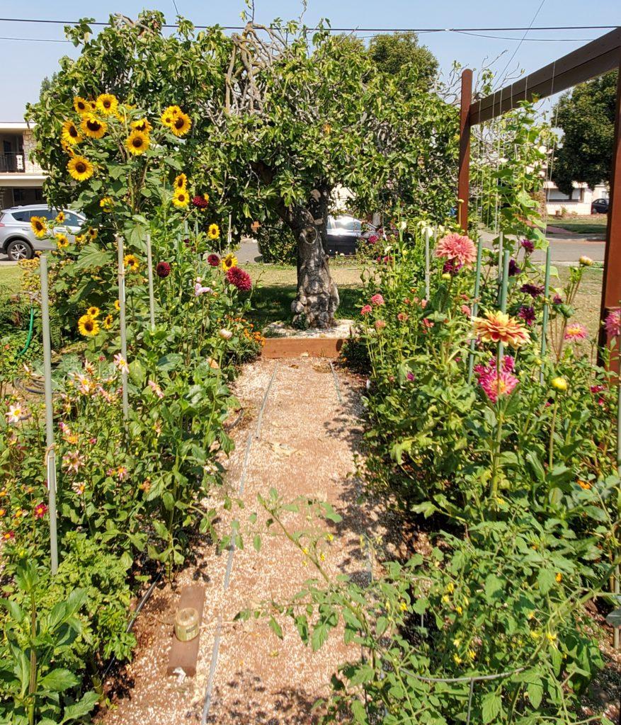 9902-Garden-Ellen Muir