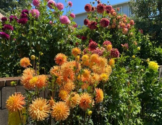 9902-Garden1-Quamrun Eldridge-Asma Khan