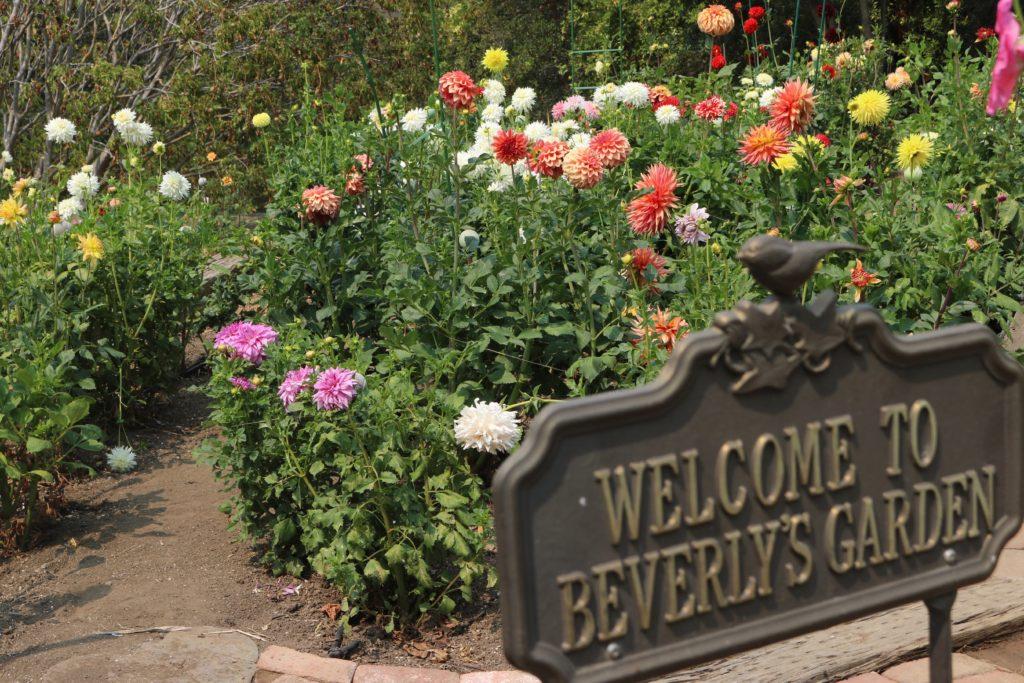 9902-My Garden-Beverly Dahlstedt