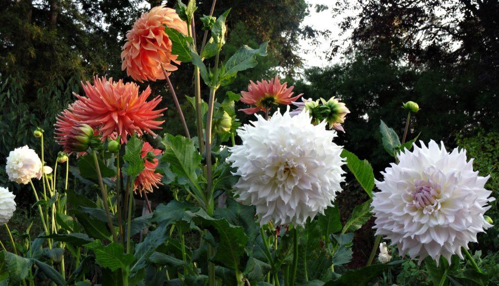 9902-Smokey Sunset in the Garden-Diane Bond-Bond Nutter