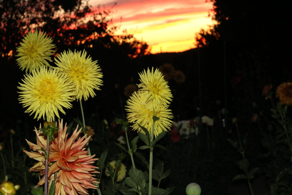 9902-Sunset in the Garden-Beverly Dahlstedt