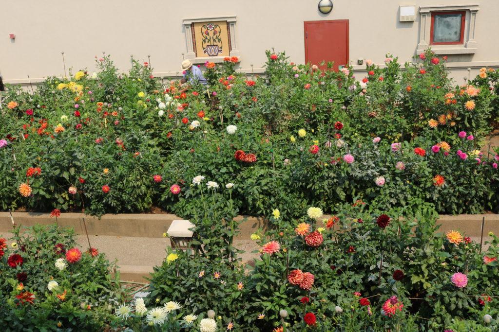 9902-Casa Peralta Garden-Tony Palacios-Beverly Dahlstedt